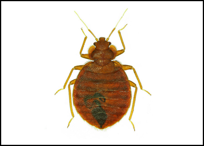 Enjoy Effective and Affordable Surrey Exterminator Services