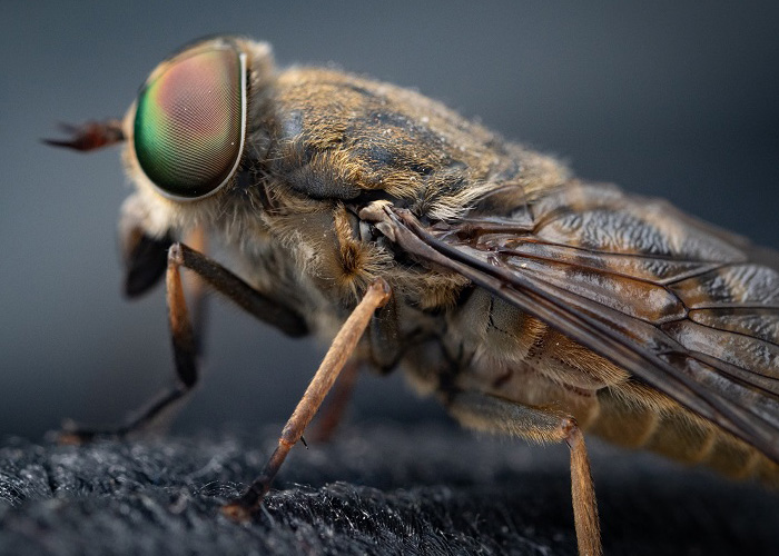 The X-Terminator: A Surrey Pest Control Company You Can Rely On